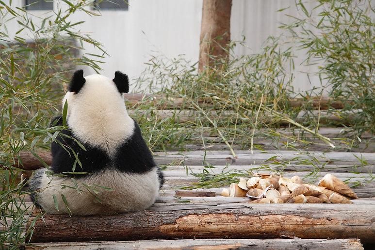 Image by Li Jiangang
