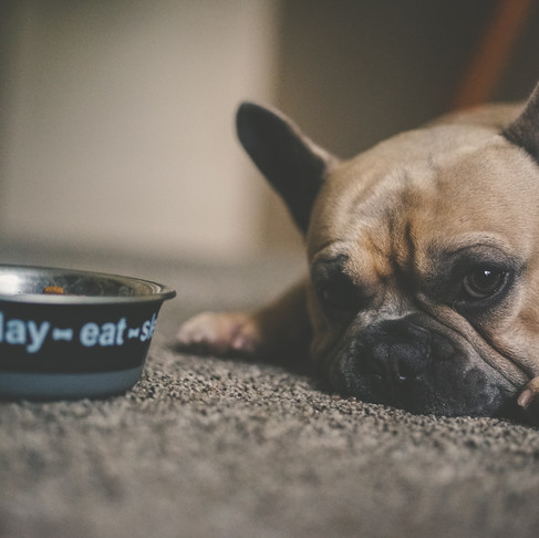How to Responsibly Feed a Fussy Pet