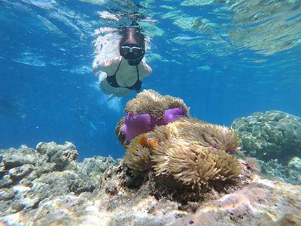 Tortuga Island Snorkeling
