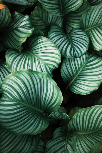 Image of white and green leaves