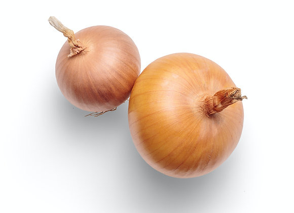 Yellow Onion 10 lbs