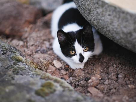 Mengapa Kucing Takut Timun? Begini Penjelasan dari Para Ahli