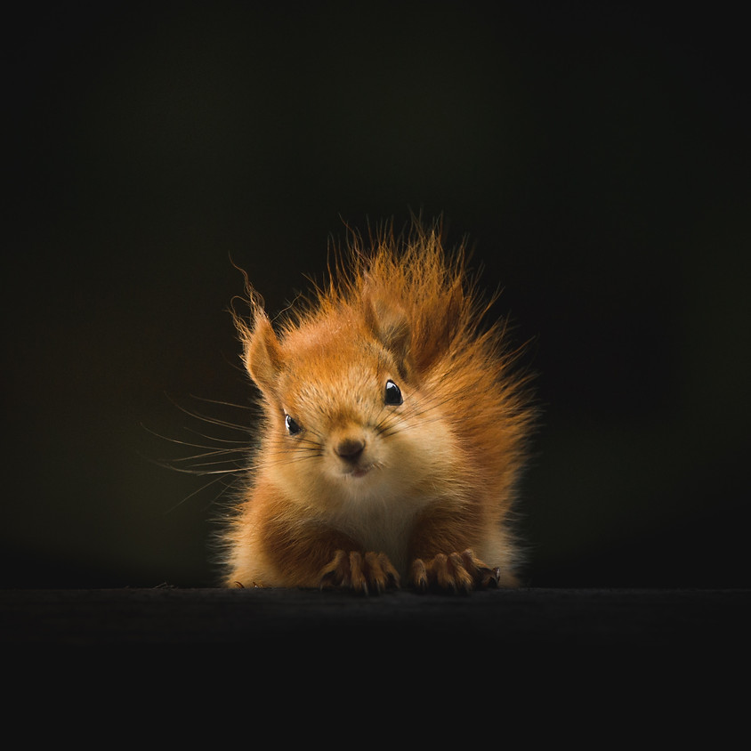 Lucky Squirrel