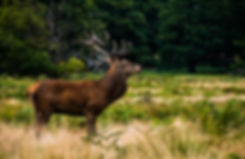 Red deer hunting new zealand