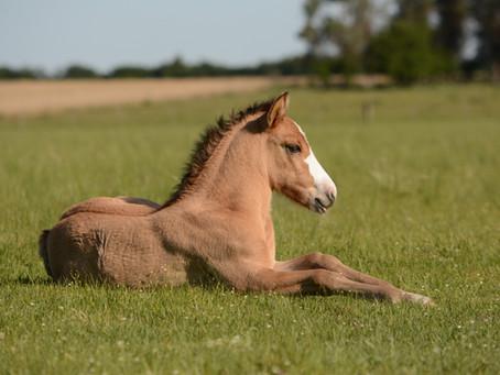 Foal Diarrhea - This Too Shall Pass