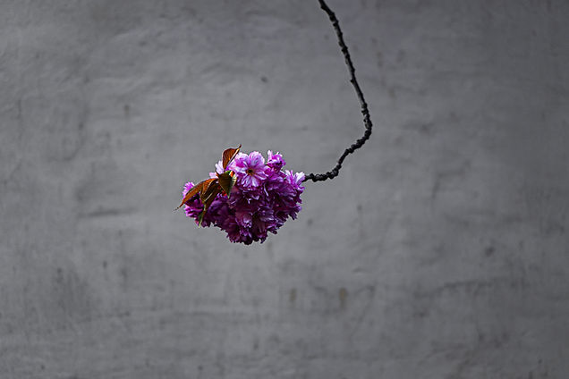 Image by Raphael Renter