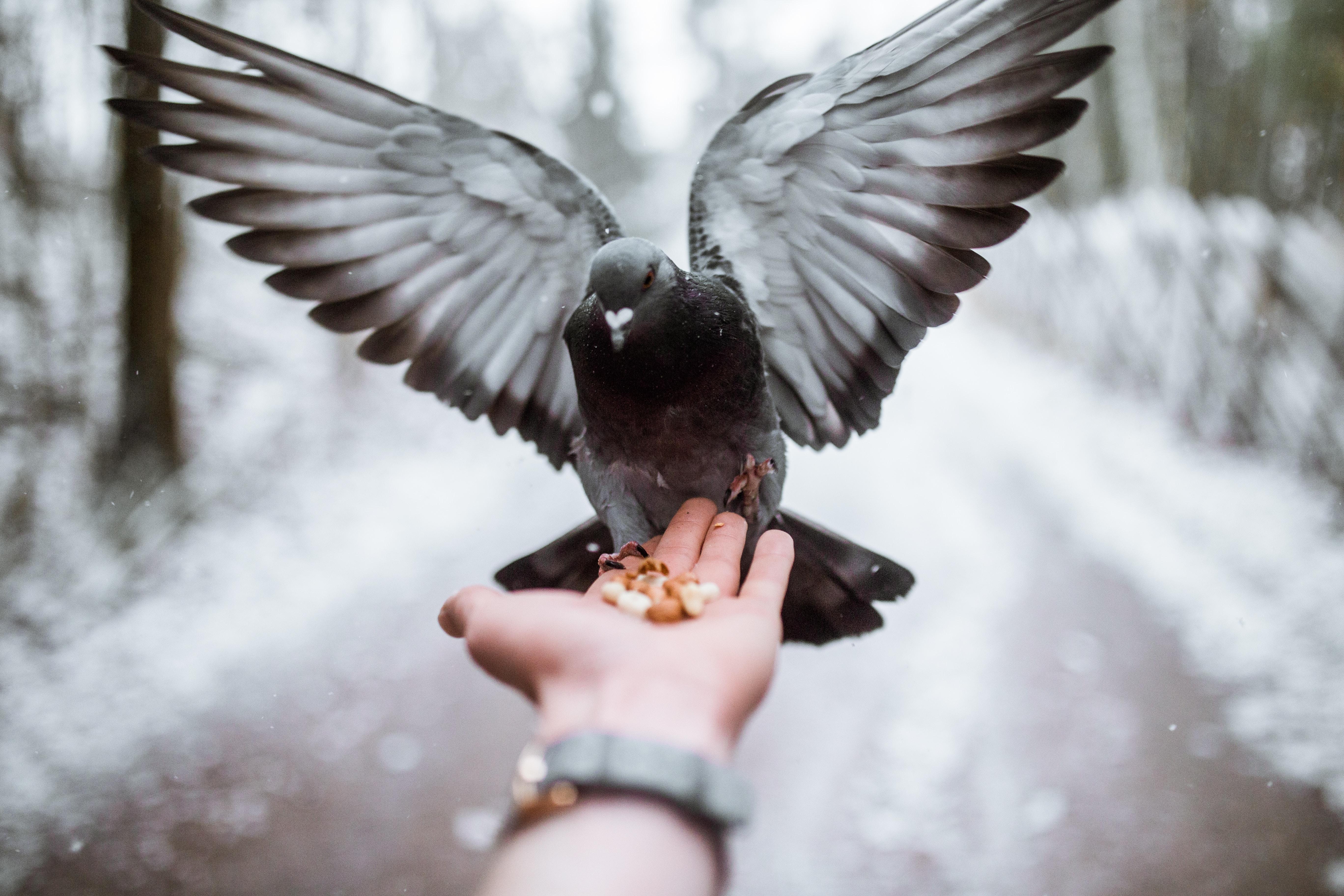 Image by Taneli Lahtinen