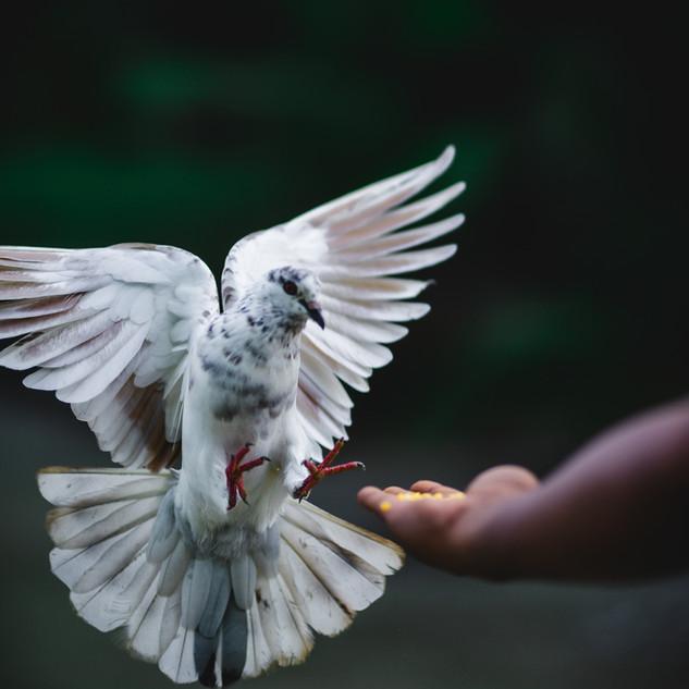 Noah sent out a dove.