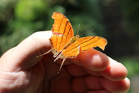 opening-day-butterfly-release-ceremony
