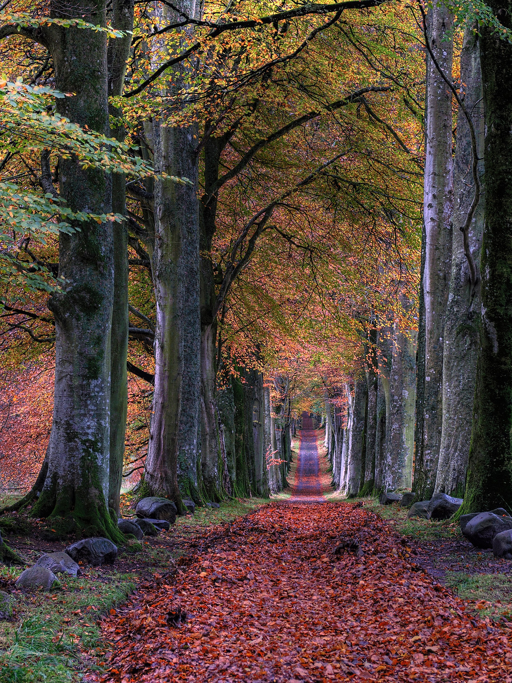 This is an image of a park path in the fall covered with leaves.