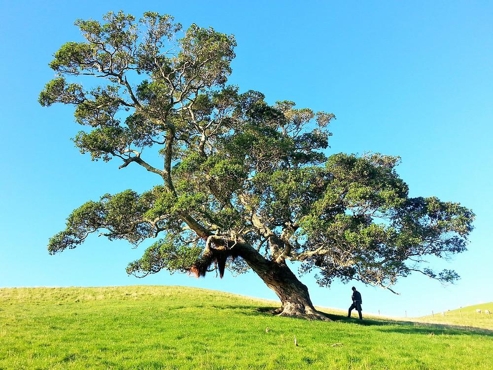 tailler un arbre élaguer