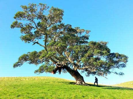 Comment tailler ses arbres? Nos conseils.