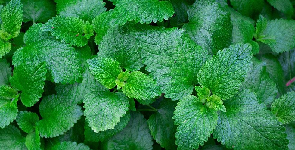 Herbs- Spearmint