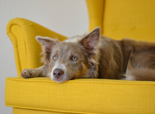 Chocolate or Gum? What's Worse For Your Dog?
