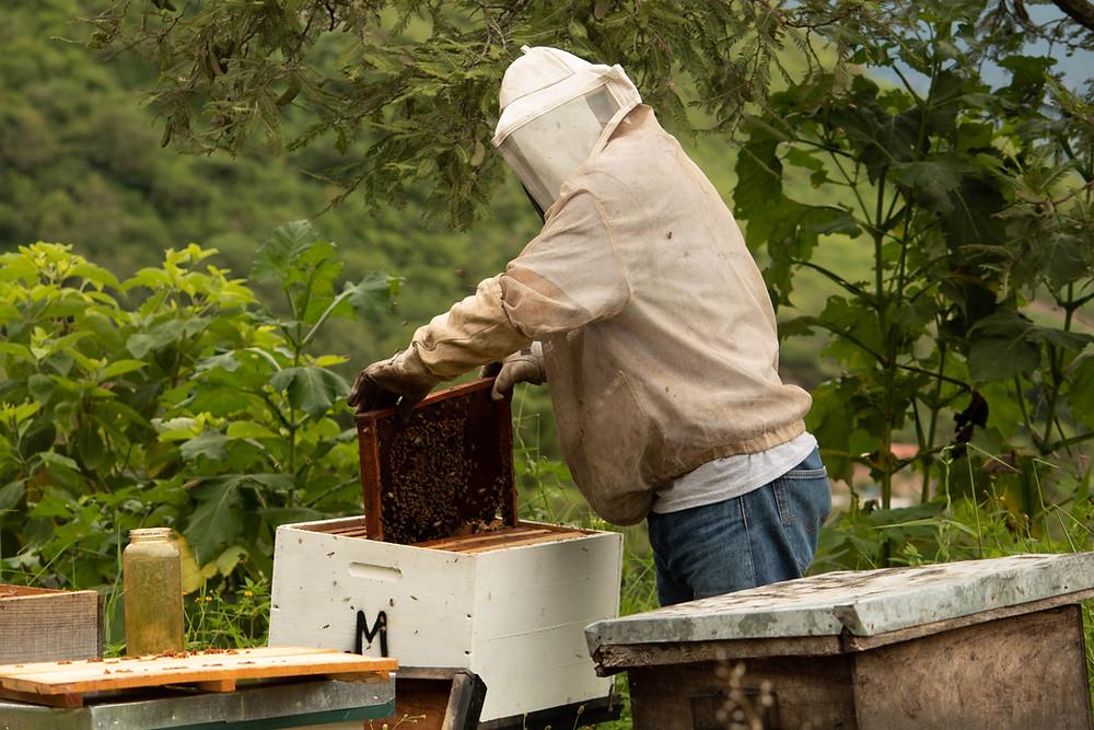 beekeeper with pollen patties