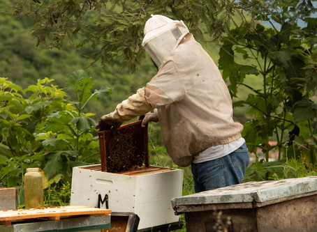 Feed Your Bees Fresh Bee Pollen this winter!