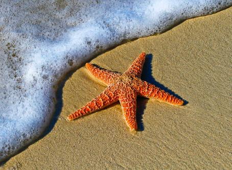 Viaggi Eco-Sostenibili: Ecco perché le stelle marine non si toccano.