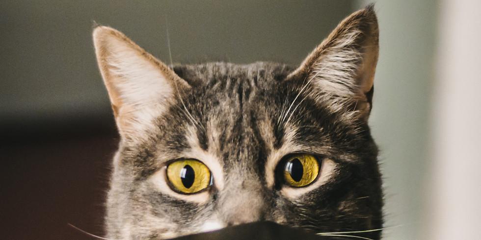 Stray Cats Dharma - Wednesday Meditation Group