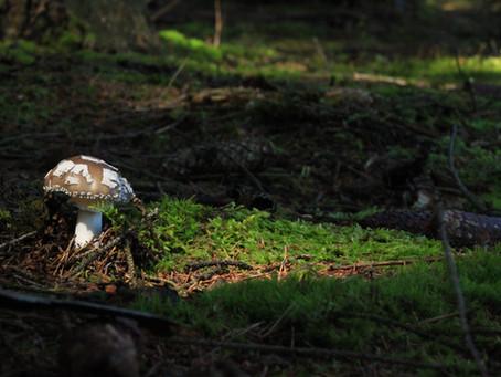 What the Fungi?