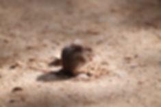 مكافحة فأر المنزل | مكافحة الفئران | مكافحة القوارض
