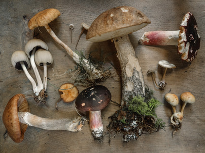 Food Stats: Mushrooms