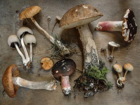 Mushrooms Benefits