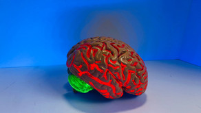 The gut bacteria and its communication with the brain