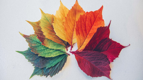 From The Garden Bench - Seasons
