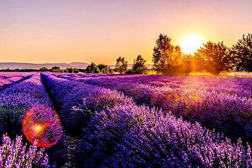 Etheric Lavender Essence Empowerment - Help with Stress, Sleep & Nerves