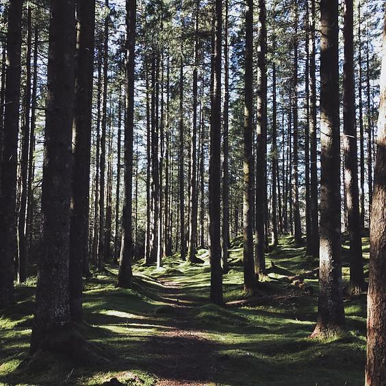 Waldbaden – Lebe Natur