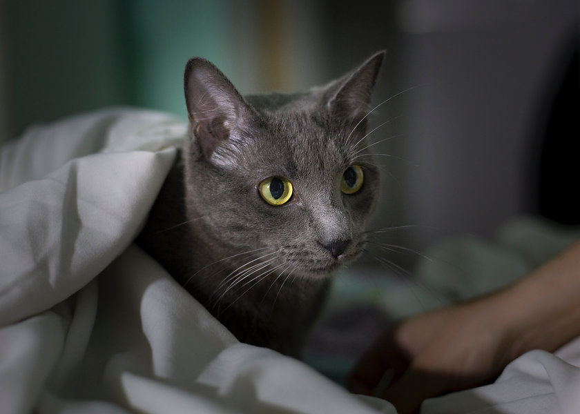 Tierpsychologische Beratung Katzenpsychologin