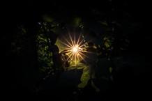 Hidden Starburst