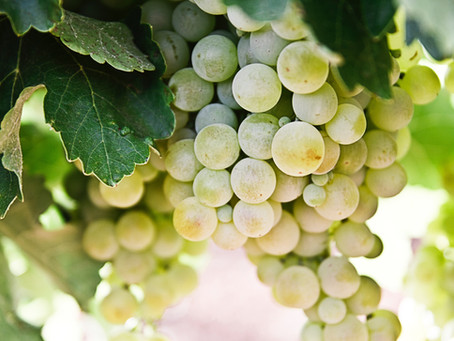 White wines – what are those weird words on the label all about?