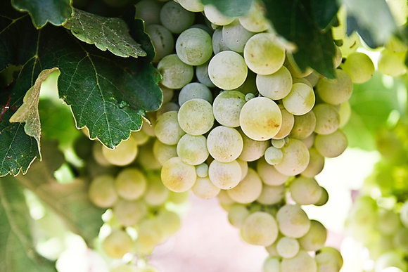 Green Grapes 1lb
