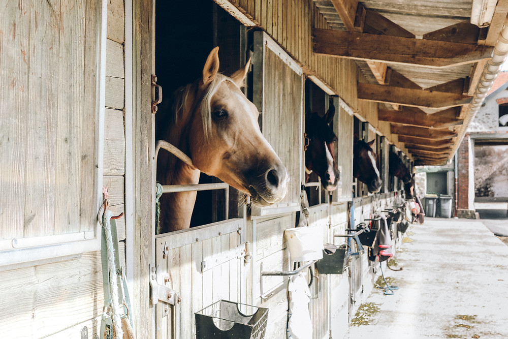horse in barn could have colic