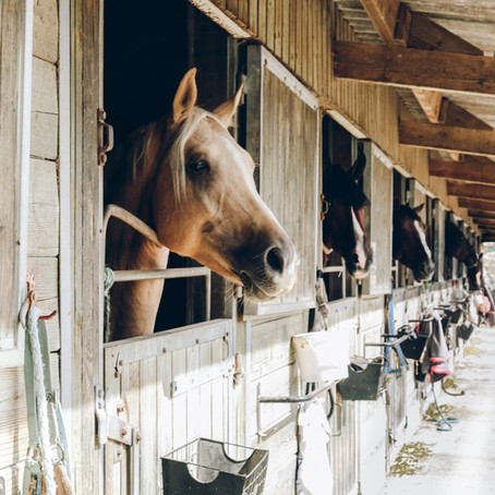 Why Ethology Should Be the Start of Every Rider's Horse Education