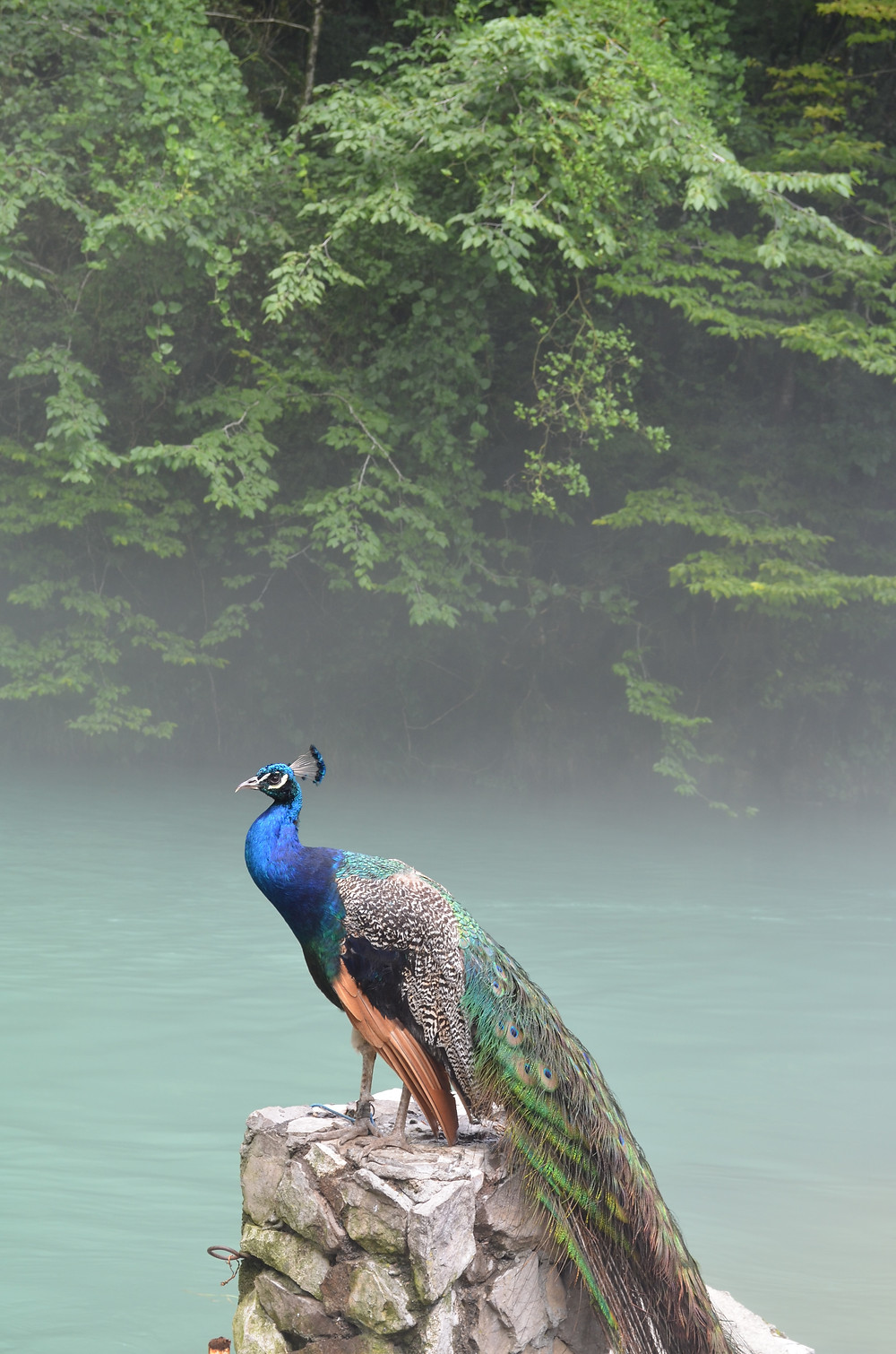 Wildlife in Abkhazia