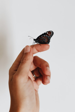 Butterfly House Experience -Included in the festival ticket