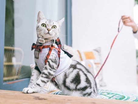 Preanesthetic Blood Work - Why Your Pet Needs It