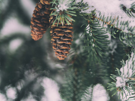 Keeping your trees happy in winter