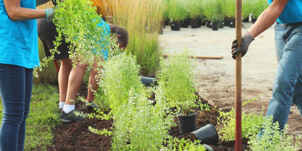 Garden Help at the Thomas Merton Center