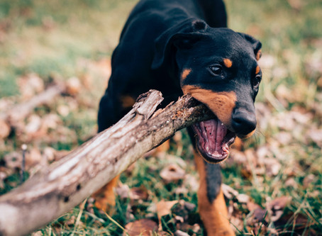 3 tips to keep your destructive dog busy