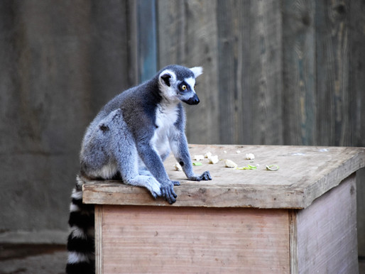 Cicchelli's Second Chance Rescue and Exotics receives official USDA warning
