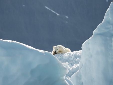 Invisible Polar bears