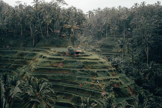 Image de Radoslav Bali
