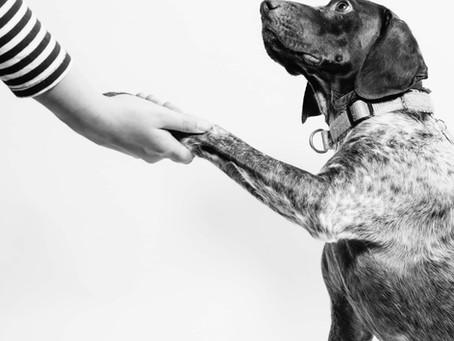 ¿Me puedo lastimar las manos paseando a mi perro?