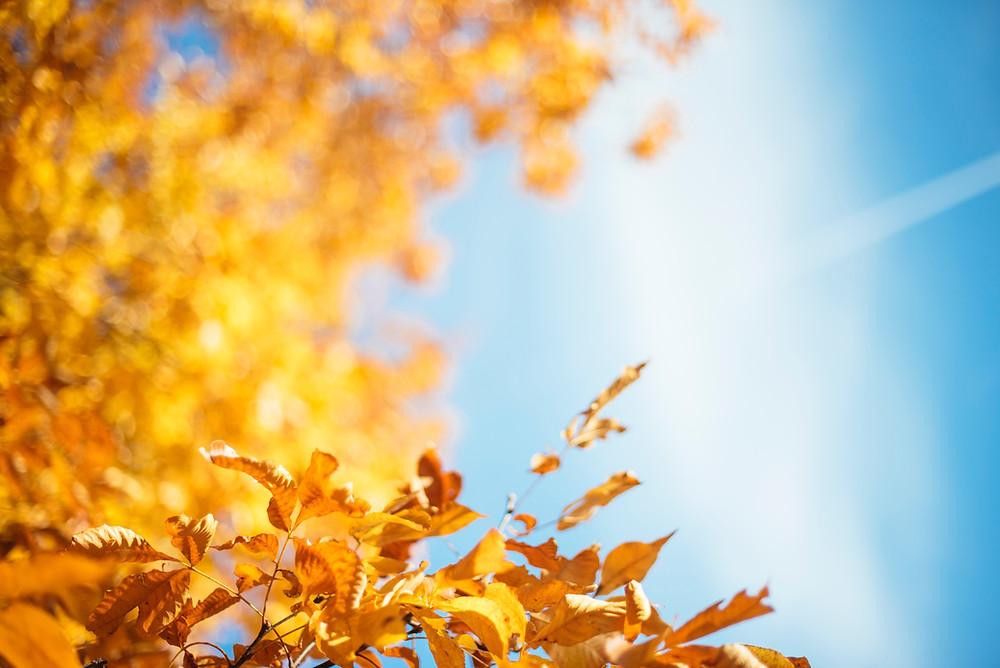 The Weather Network ha publicado su pronóstico del clima para otoño.