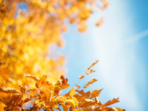 Así se comportará el clima durante el otoño en Ontario