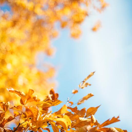 WEERBERICHT: Tot woensdag nog zomerse temperaturen, daarna herfstachtig weer