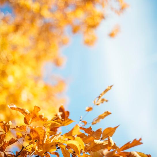 WEERBERICHT: Zonnig en fris weekend. Ook maandag veel zon
